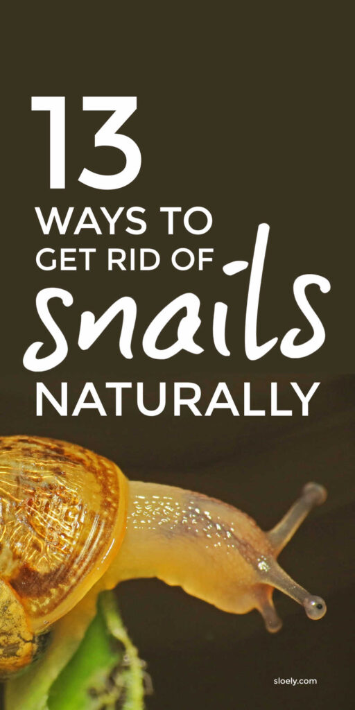Natural Ways To Get Rid Of Snails and Slugs