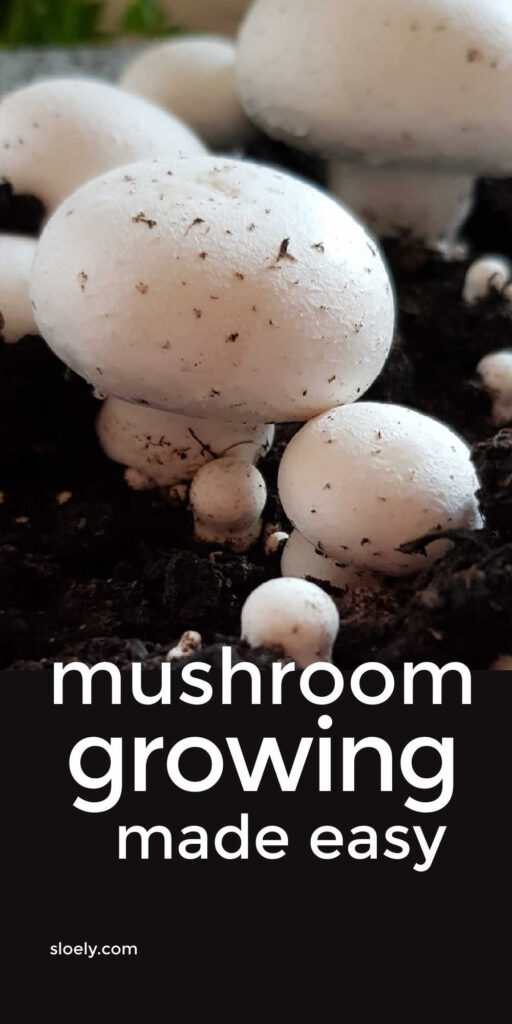Mushroom Growing At Home