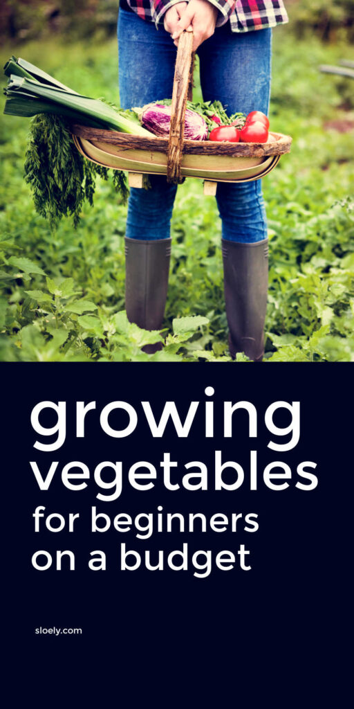Growing Vegetables For Beginners On A Budget
