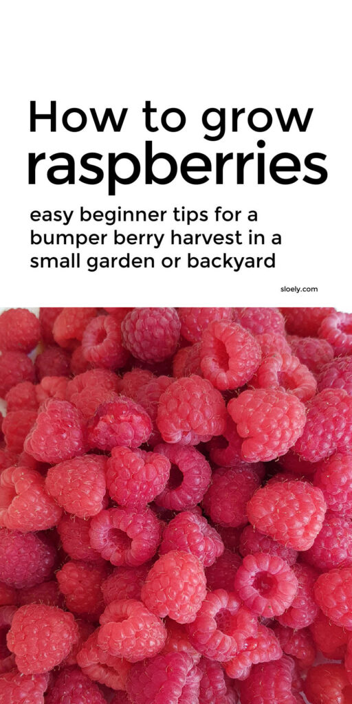 How To Grow Raspberries In A Small Space