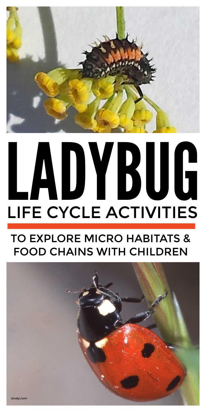 Ladybug Life Cycle Activities
