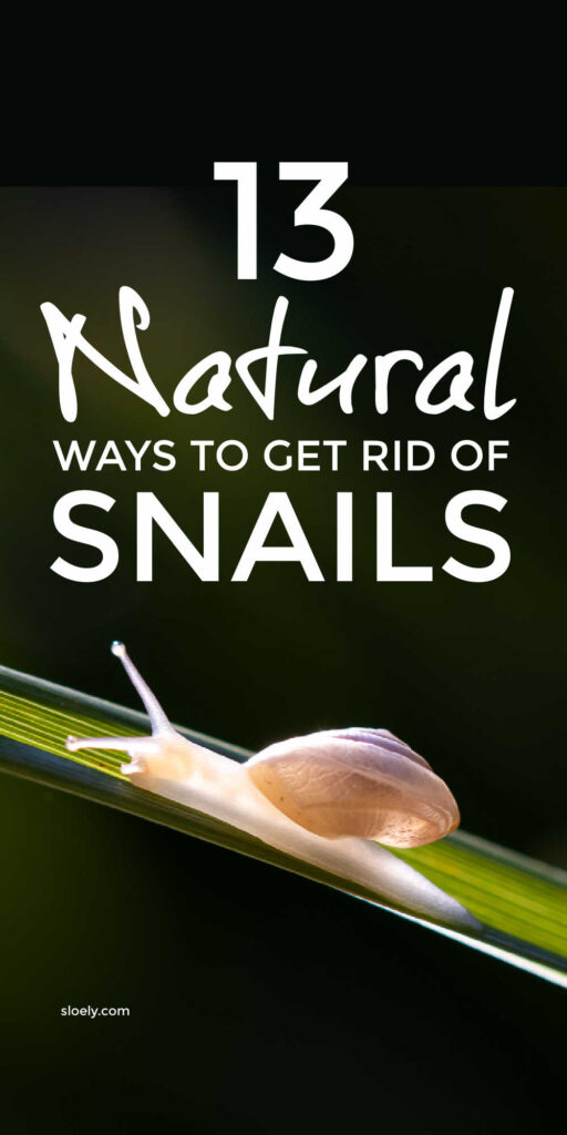 Natural Ways To Get Rid Of Snails