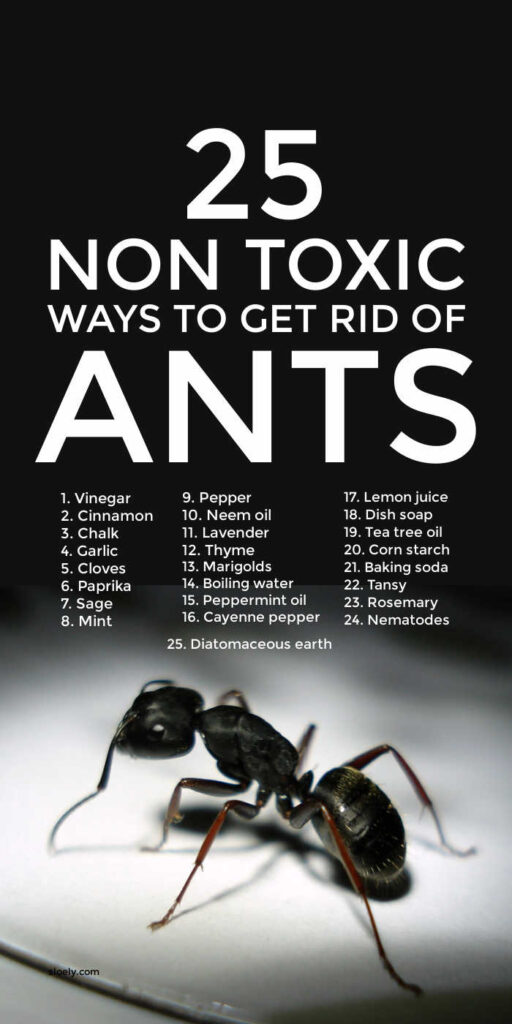 Non Toxic Ways To Get Rid Of Ants