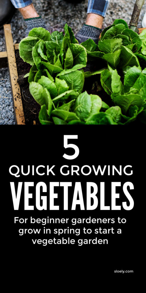 Quick Growing Vegetables For Spring