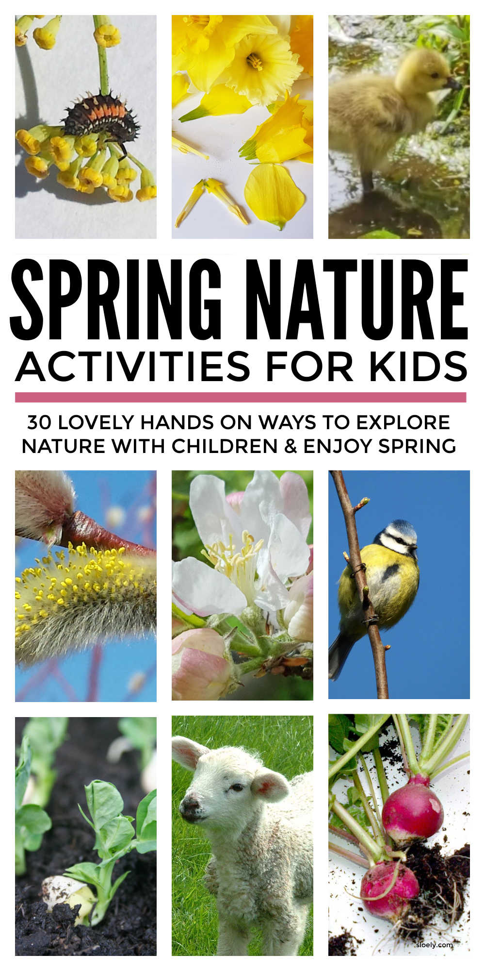 Spring Nature Activities For Kids