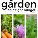 Start A Vegetable Garden On A Budget