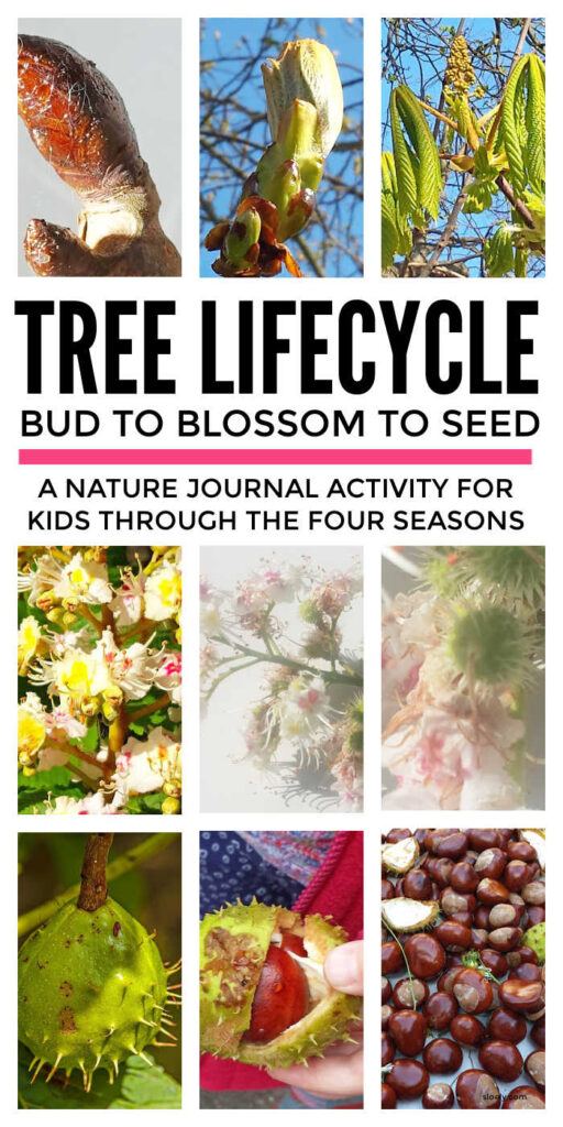 Tree Lifecycle Nature Journal for Kids