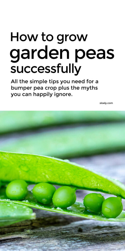 How To Grow Peas Successfully Organically