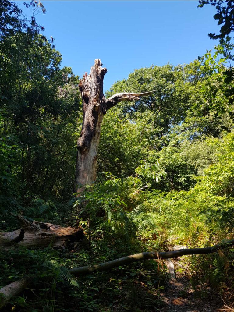 Oxleas Wood Walks