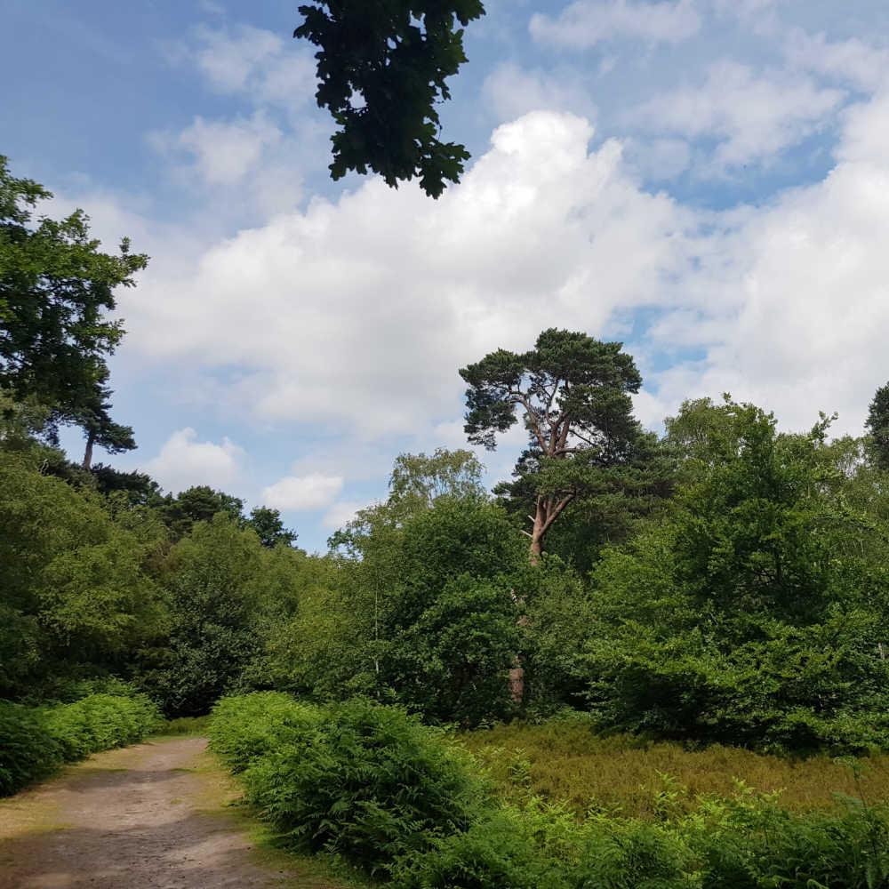 Petts Woods & Hawkwood Estate Circular Walks