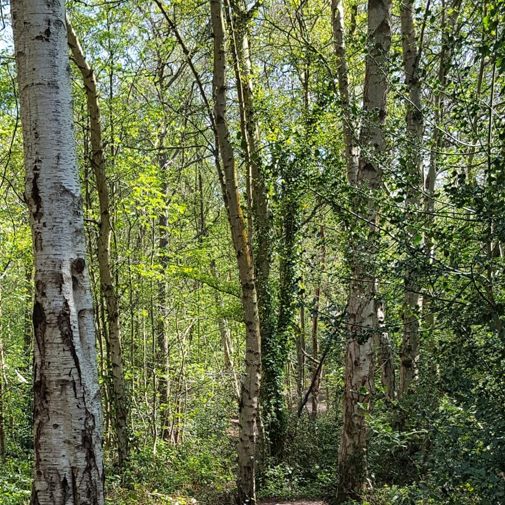Walking In Petts Wood London