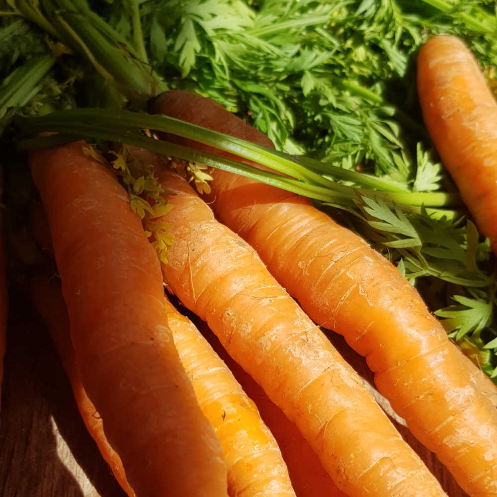 Quick Growing Vegetables - Carrots