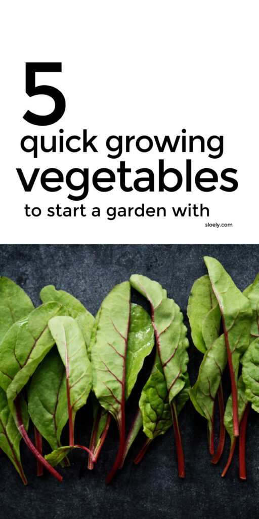 Quick Growing Vegetables To Start A Garden With