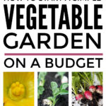 How To Start A Vegetable Garden On A Budget