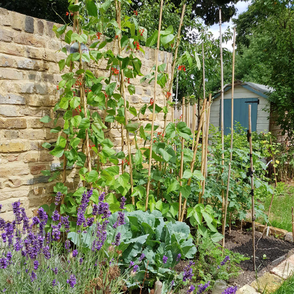 Vegetable Garden With Herbs