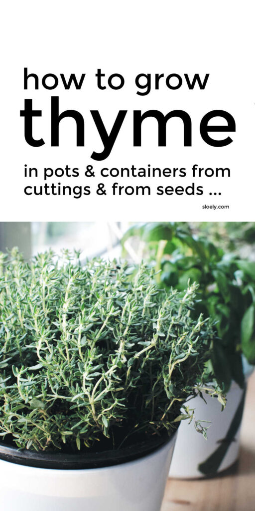 How To Grow Thyme In Containers From Cuttings