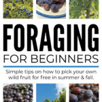 Foraging Wild Food For Beginners In Summer & Fall