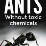 How To Get Rid Of Ants Without Toxic Chemicals