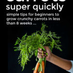 How To Grow Carrots Very Quickly