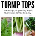 How To Grow Turnip Greens