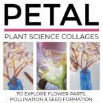 Flower Petal Plant Science Collages