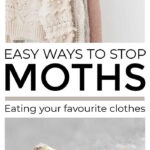 Stop Moths Eating Clothes