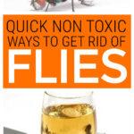 Non Toxic Ways To Get Rid Of Flies