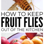 How To Keep Fruit Flies Out Of The Kitchen