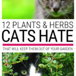 Plants Cats Hate