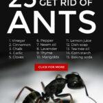 Best Ways To Get Rid Of Ants