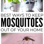 How To Keep Mosquitoes Out Of Your Home