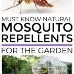 Natural Mosquito Repellents For The Garden