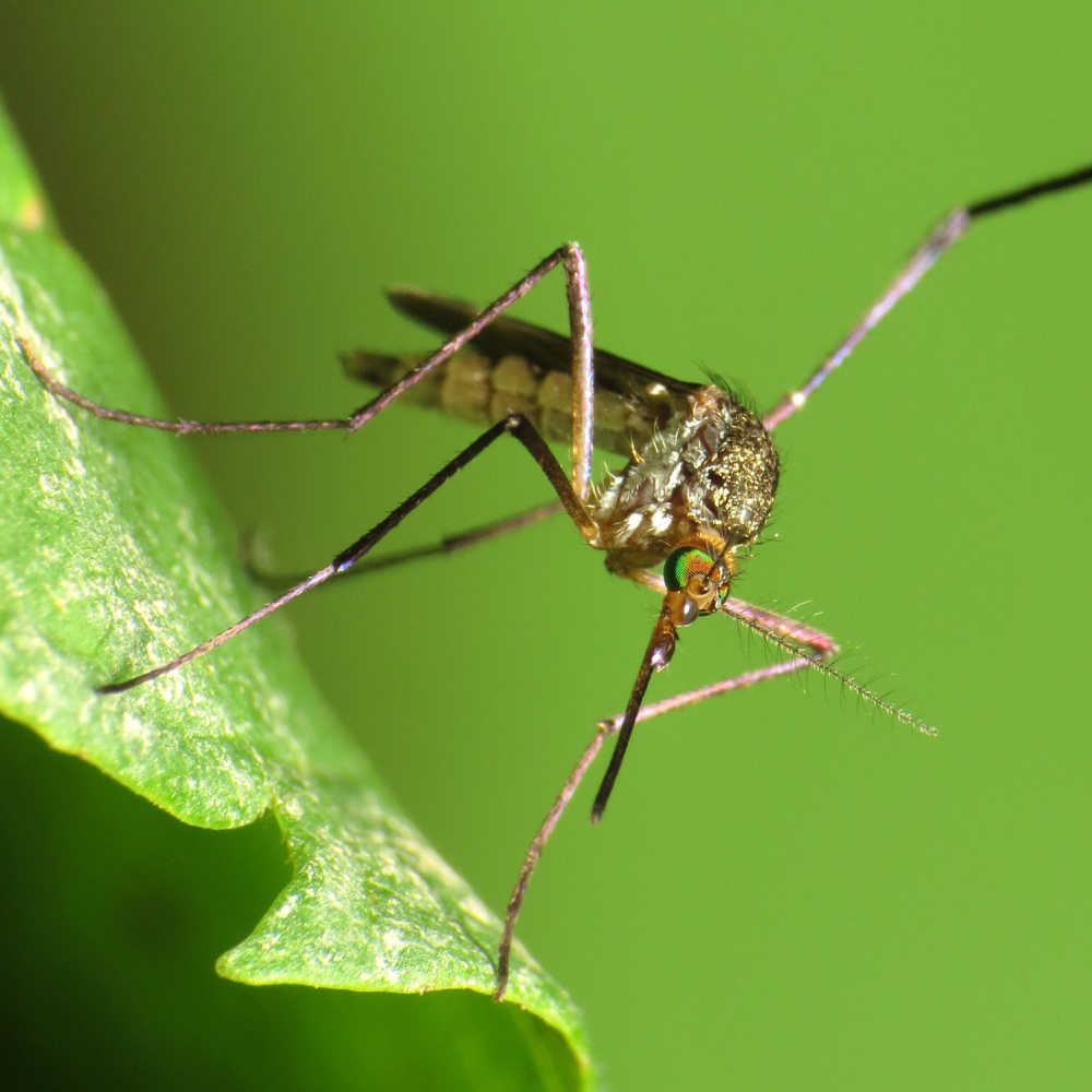 Natural Mosquito Repellents For Garden And Camping