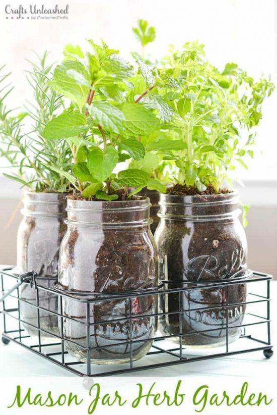 Mason Jar Herb Garden As Cheap DIY Christmas Gift