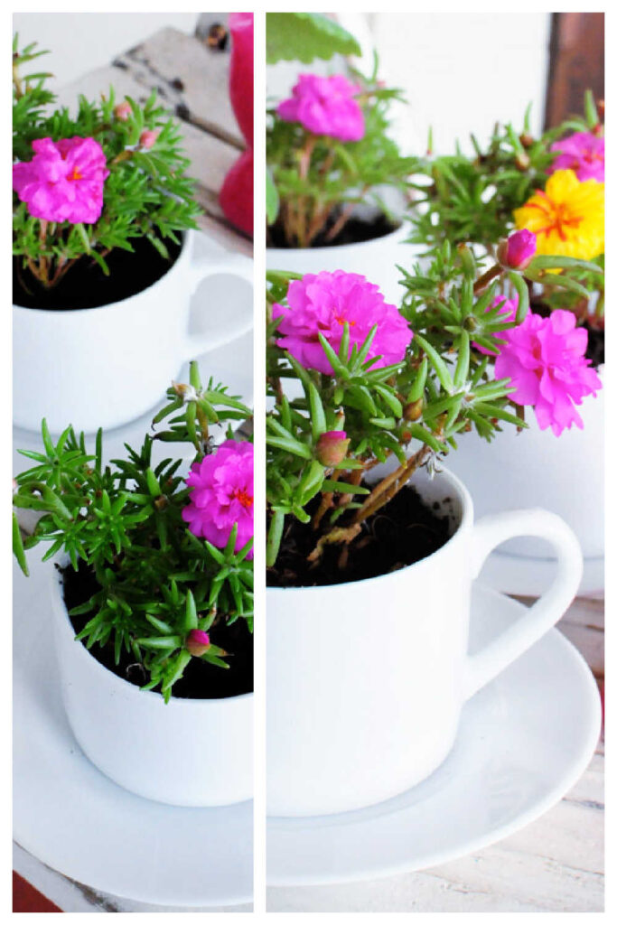 Old Teacups As Planter Pots Make Lovely Cheap DIY Gifts