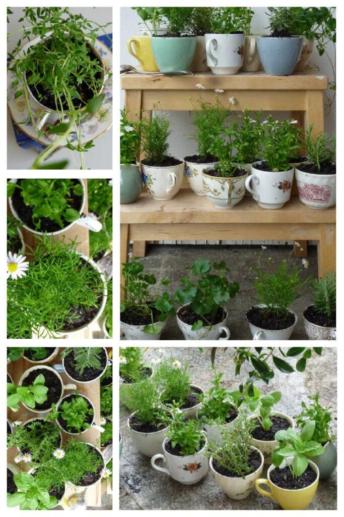 Inexpensive DIY Garden Gifts - Teacup Herb Garden